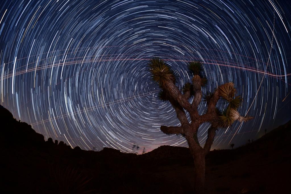 Joshua-Tree-Stars.jpg