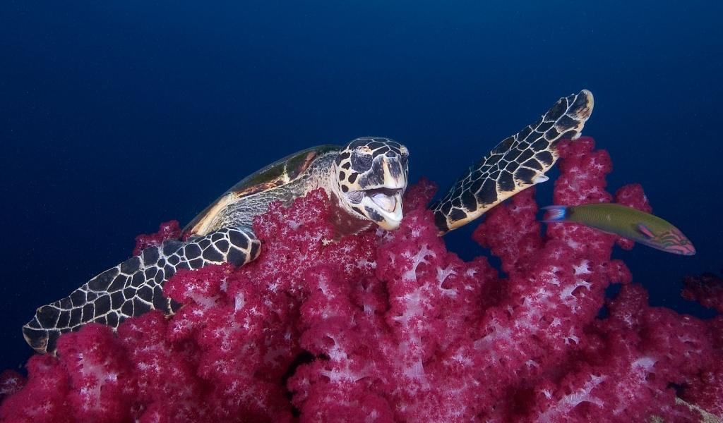 Yongala-turtle.jpg